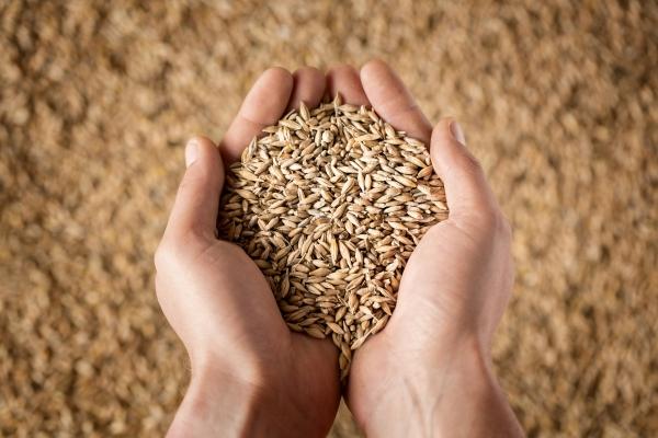 Poignée de graines, Europe en Poitou-Charentes
