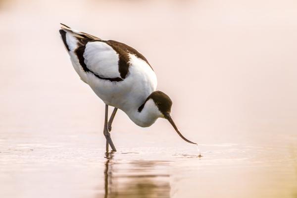 Oiseau, Terre de Sel