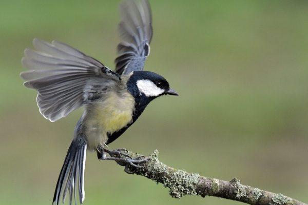Oiseau, Pays de Thiérache